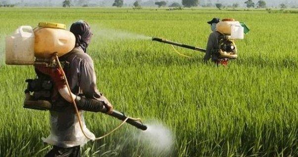 Alerta por el uso de insecticidas.